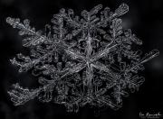 1d4-snowflake24