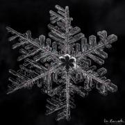 1d4-snowflake5