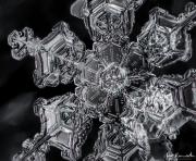 feb29-snowflake1-cropped1024wm