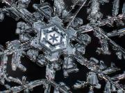 royal-symmetry