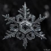 star-of-winter