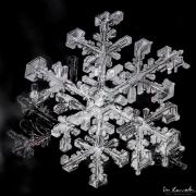 1d4-snowflake6