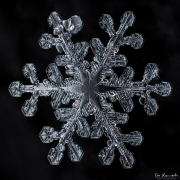 ice-petals